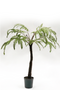Faux Fern Tree | Silk-ka Fern | DutchFurniture.com