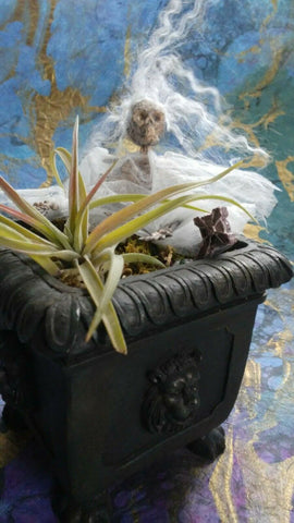 Altered Art - Ghost's Tombstone Air Plant