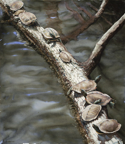 Nine Turtles