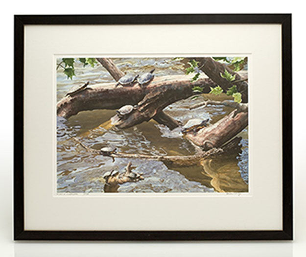 Framed Sample - Large Prints | Turtle Prints and Watercolors
