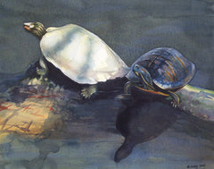Two Turtles II