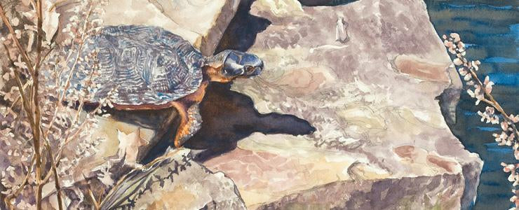 https://www.turtlepaintings.com/products/heading-for-water