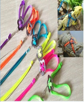 Reptile harness and lead