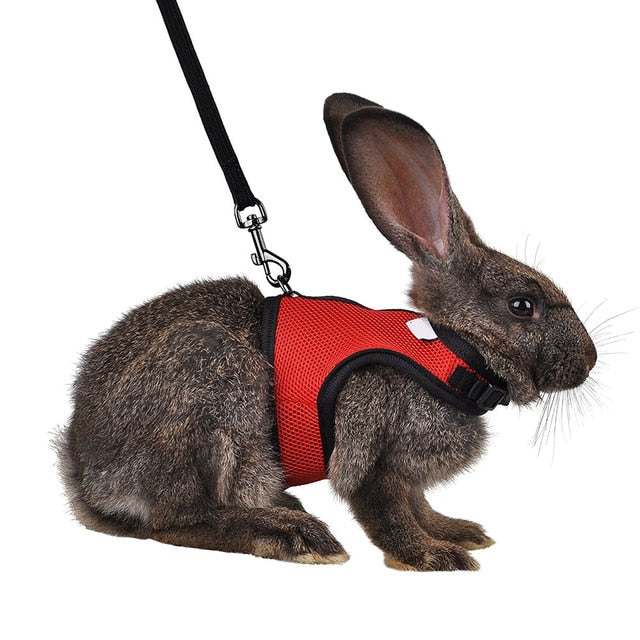 Pet Harness with Lead
