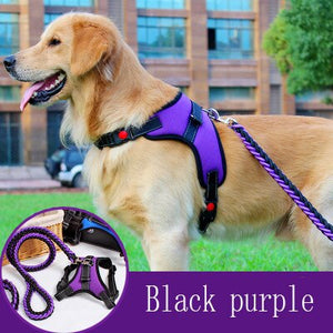 Big Dog Leash And Collar