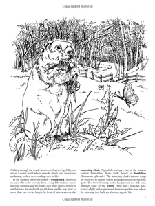A Walk in the Woods Coloring Book