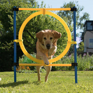 PAWISE Pet Dogs Outdoor Games Agility Exercise Training Equipment Agility Starter Kit Jump Hoop