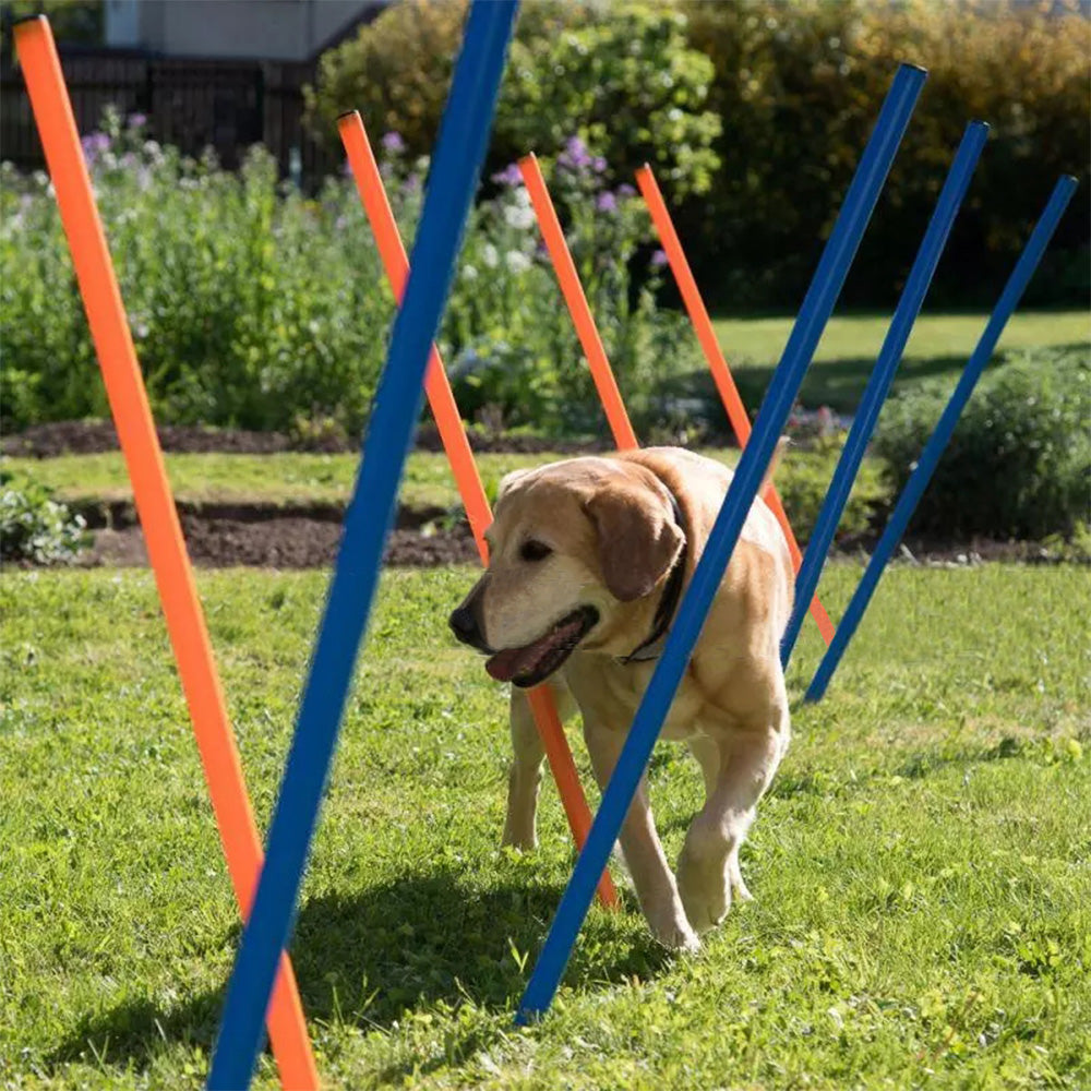 PAWISE Pet Dogs Outdoor Games Agility Exercise Training Equipment Agility Starter Kit