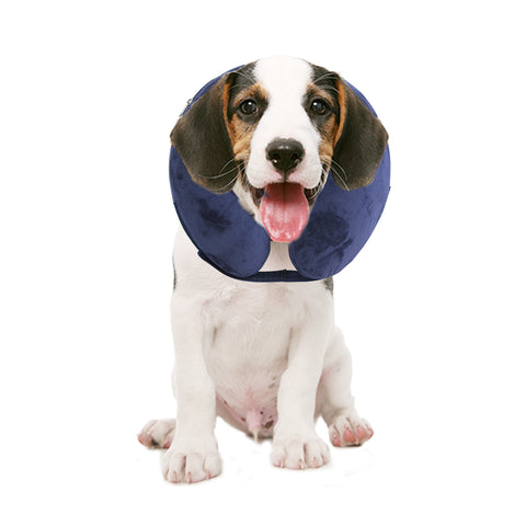 PAWISE Inflatable Protective E-Collar for Dogs and Cats
