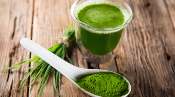 14 Ways Wheatgrass Boosts Your Immunity and Energy