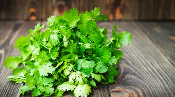 Cilantro: Purifying the Body and Mind