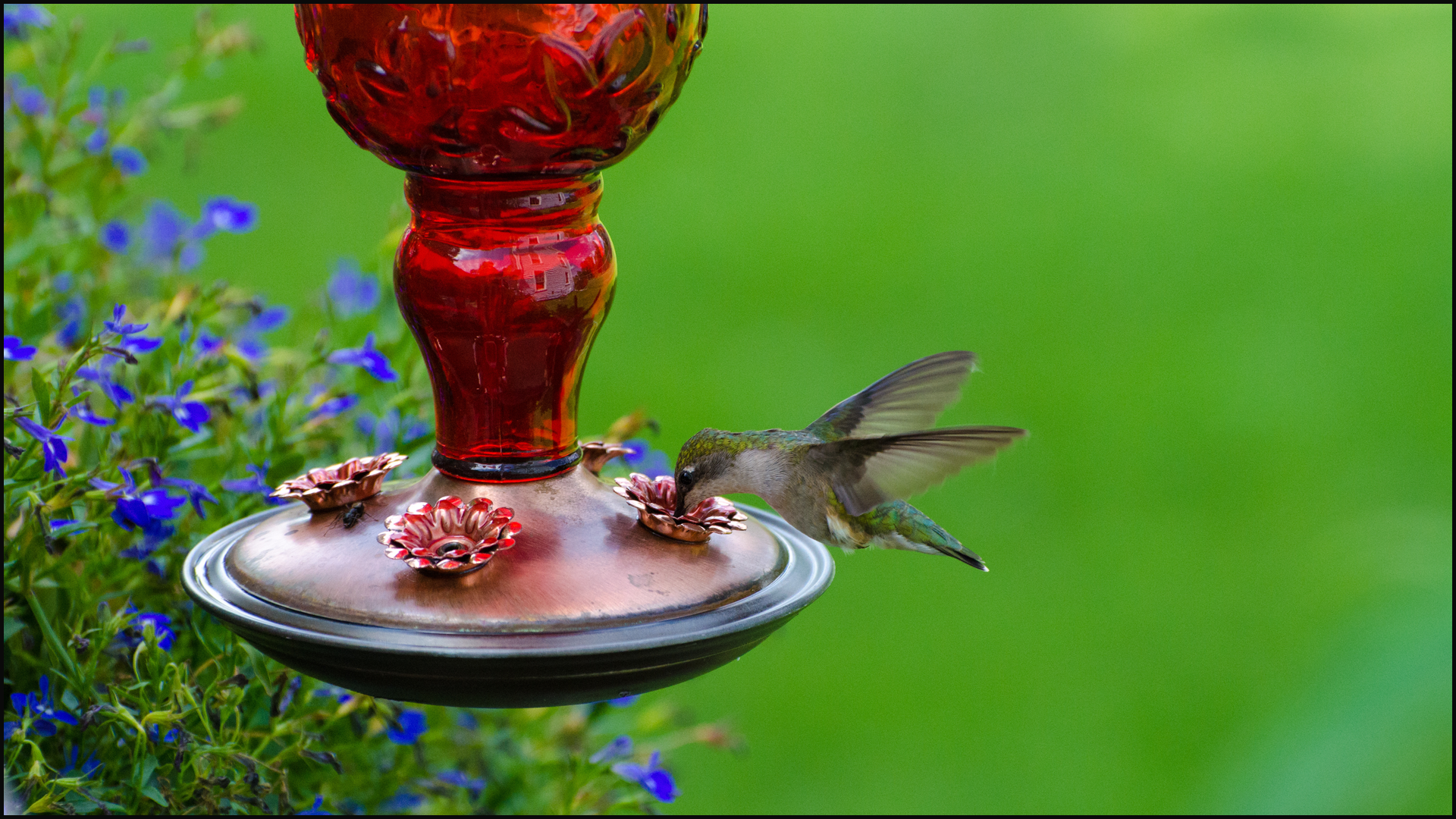 Top 10 Bird Feeding Mistakes
