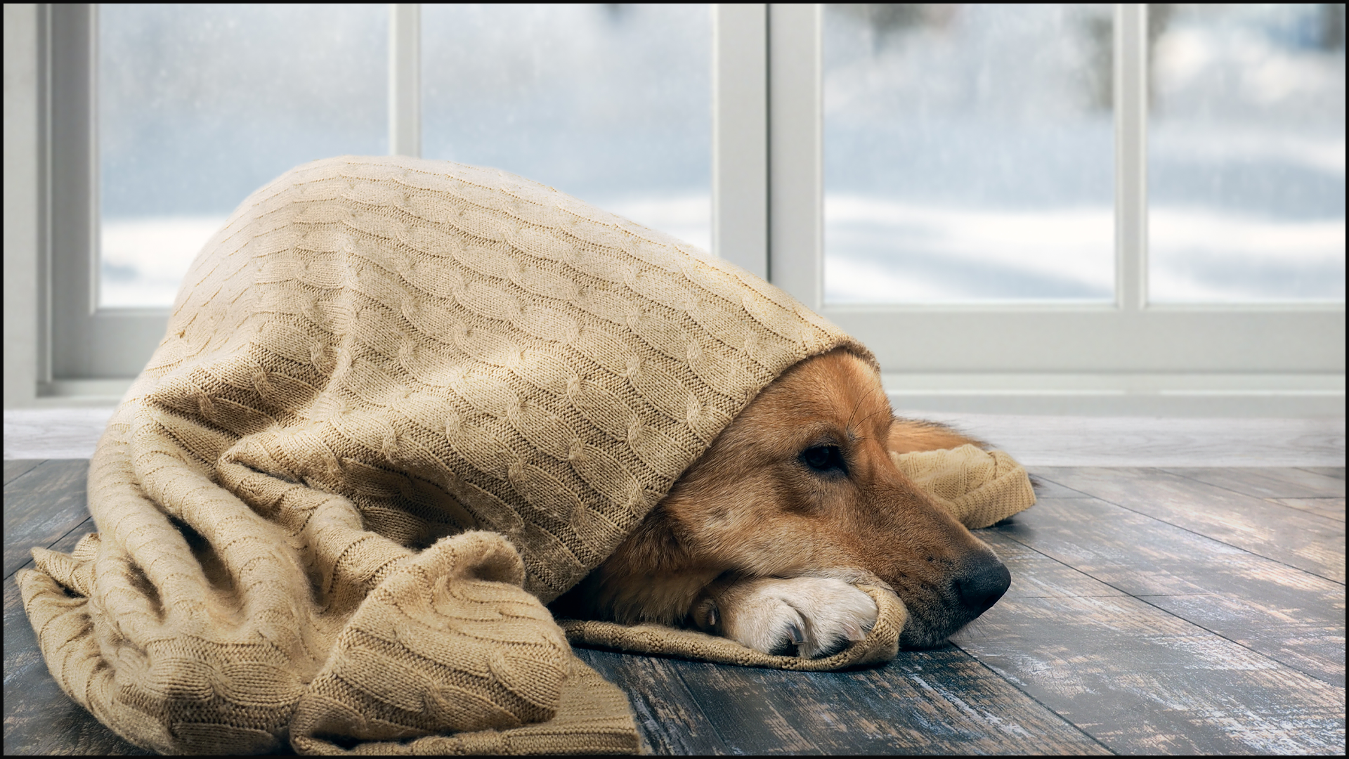 12 Tips to Keep Your Pets Safe in Cold Weather
