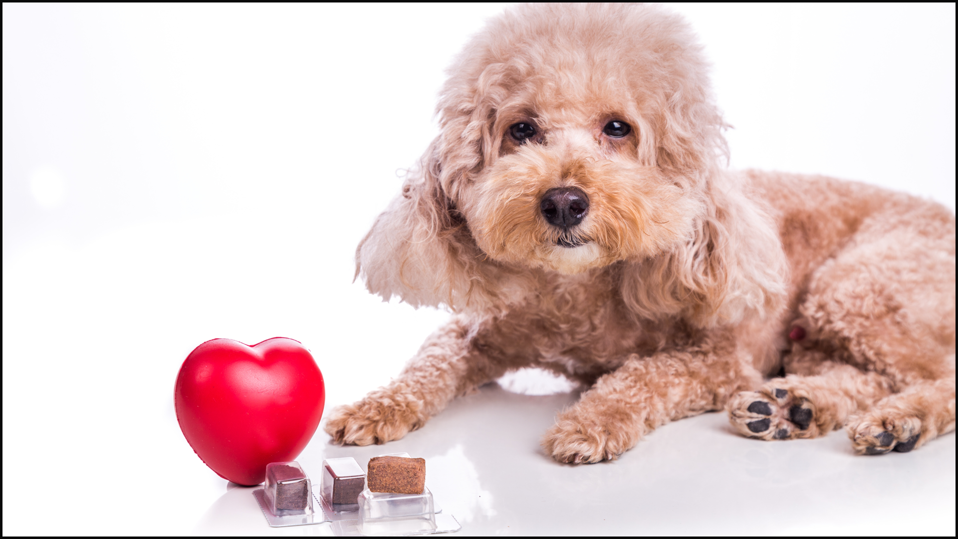 5 Heartworm Facts You Need to Know