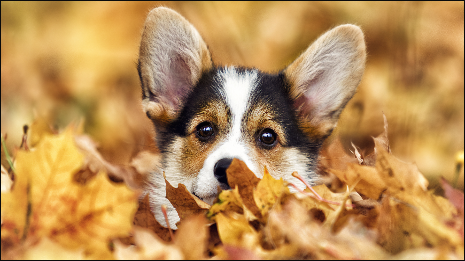 Autumn Safety Tips for Your Pets