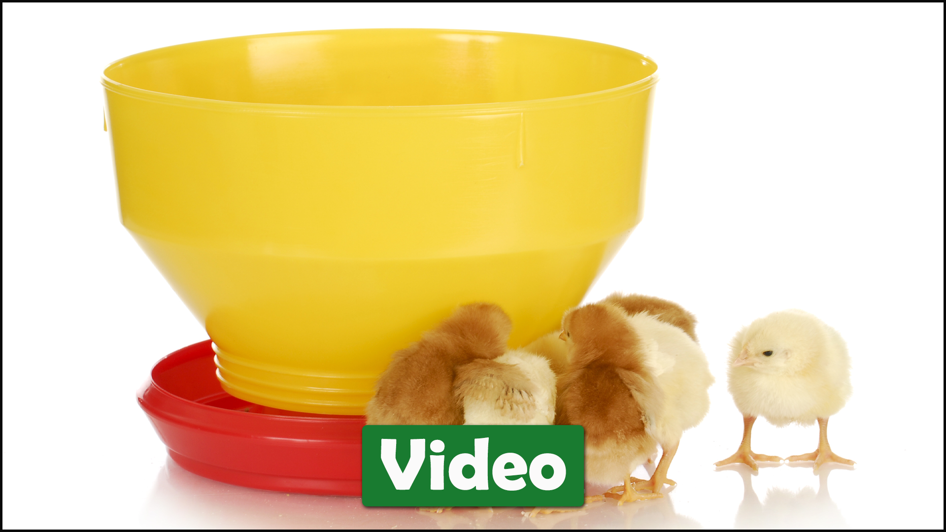 Poultry Feeders and Waterers:  Which is Best?