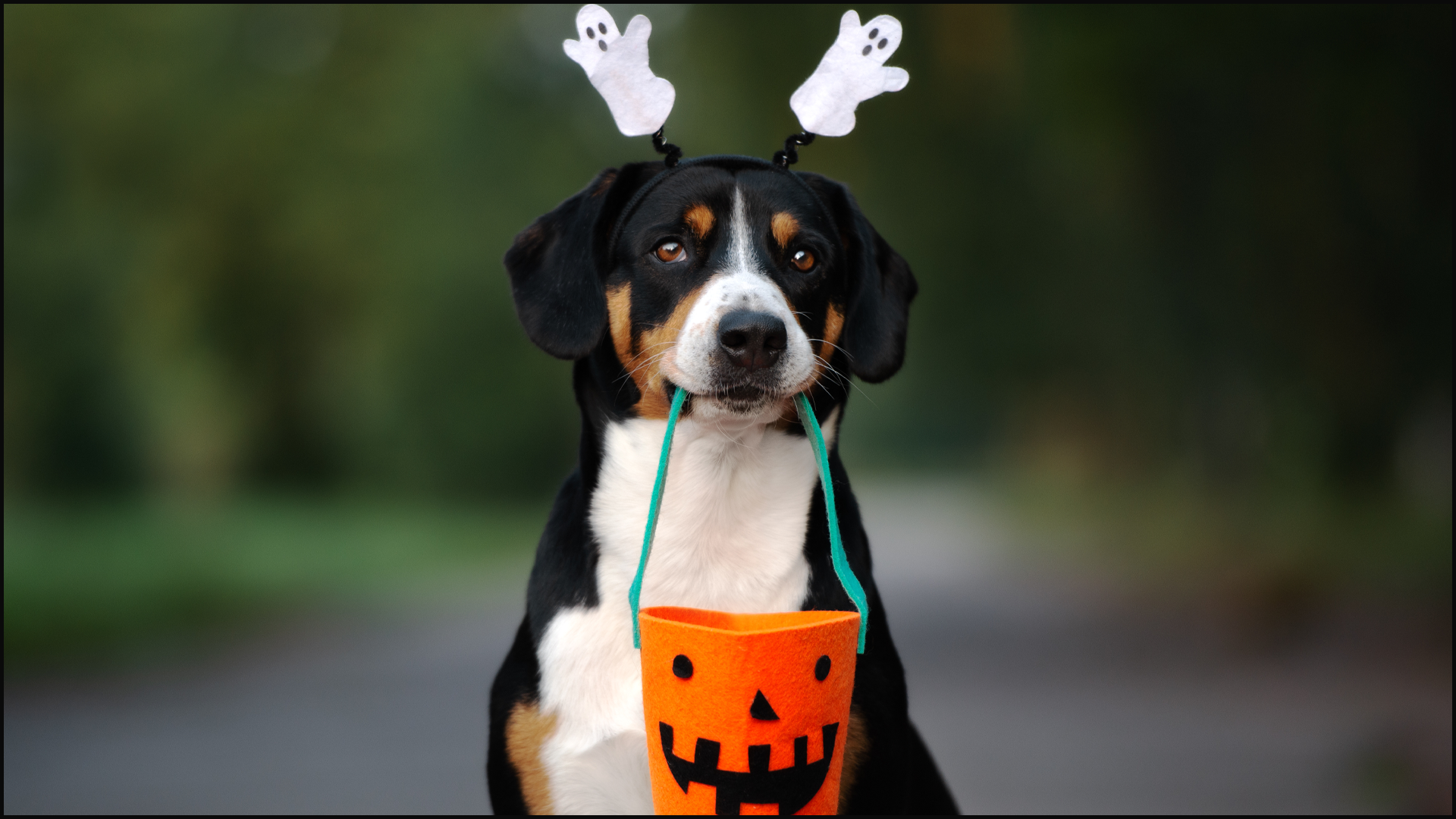 Halloween Costumes and Your Pets