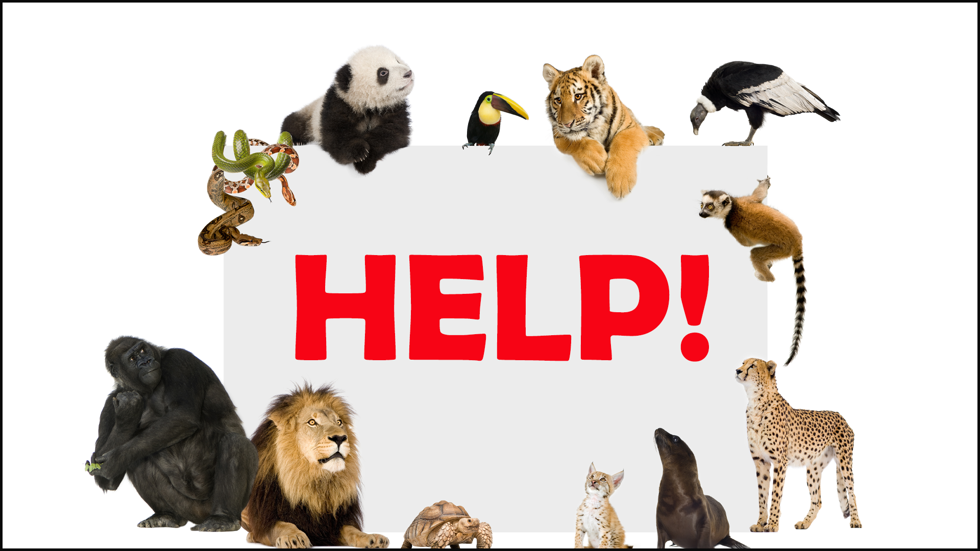 Helping Endangered Wildlife