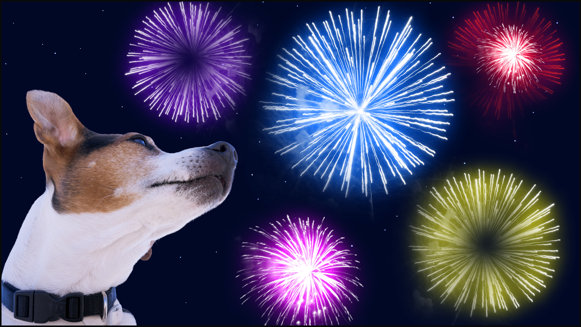 Happy 4th of July!  Ways You Can Help Calm Anxiety with Your Pets