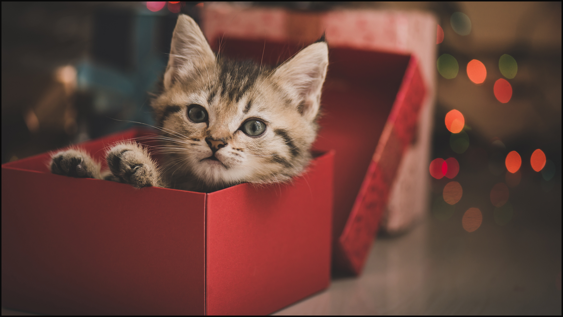 4 Tips You Should Consider Before Giving a Pet as a Gift