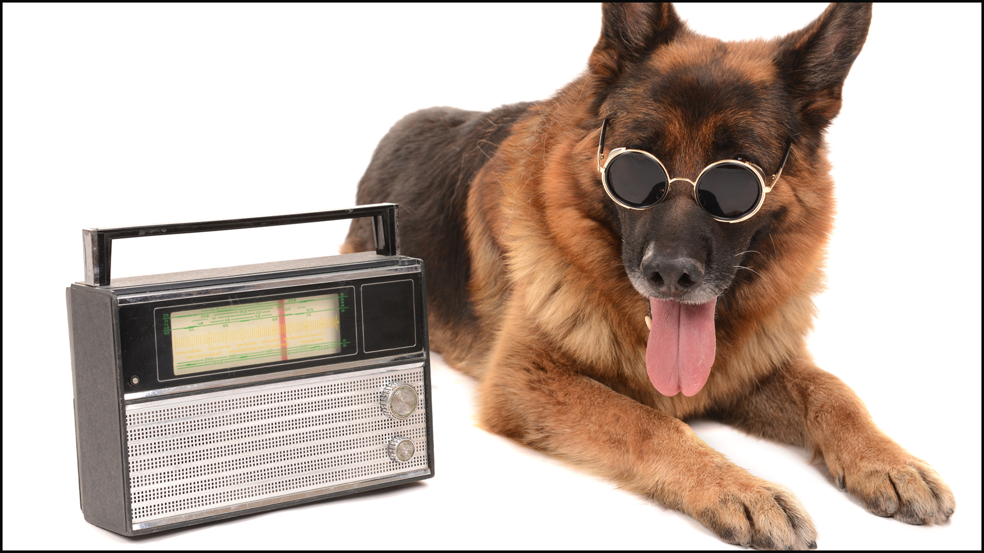 The Pros and Cons of Leaving the TV and/or Radio On for Your Pets