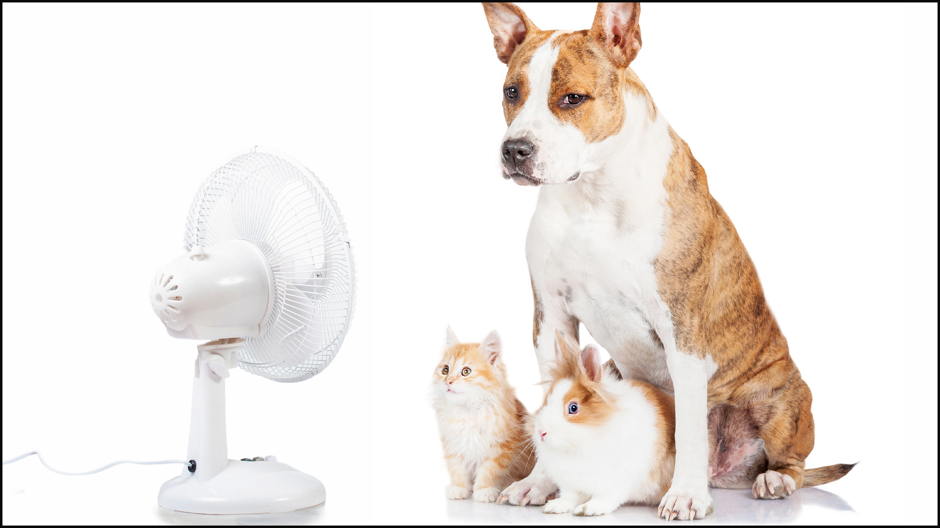 Tips on Protecting Your Pets in Hot Weather