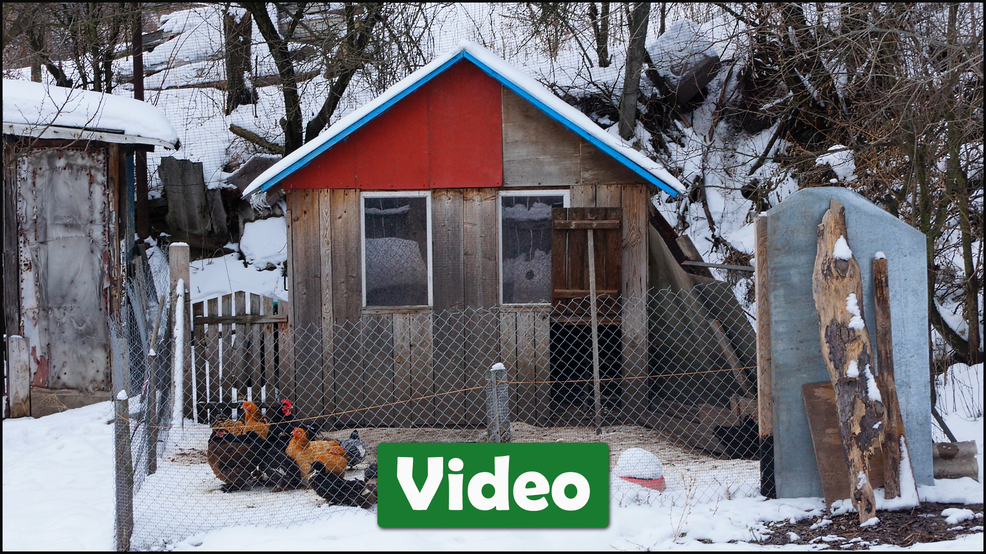 Preparing Your Coop for Cold Weather