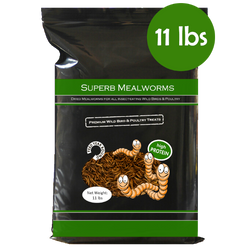 Superb Mealworms® Bag 11 lbs