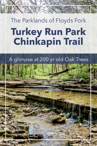 Guide to hiking Chinkapin Trail in Turkey Run Park