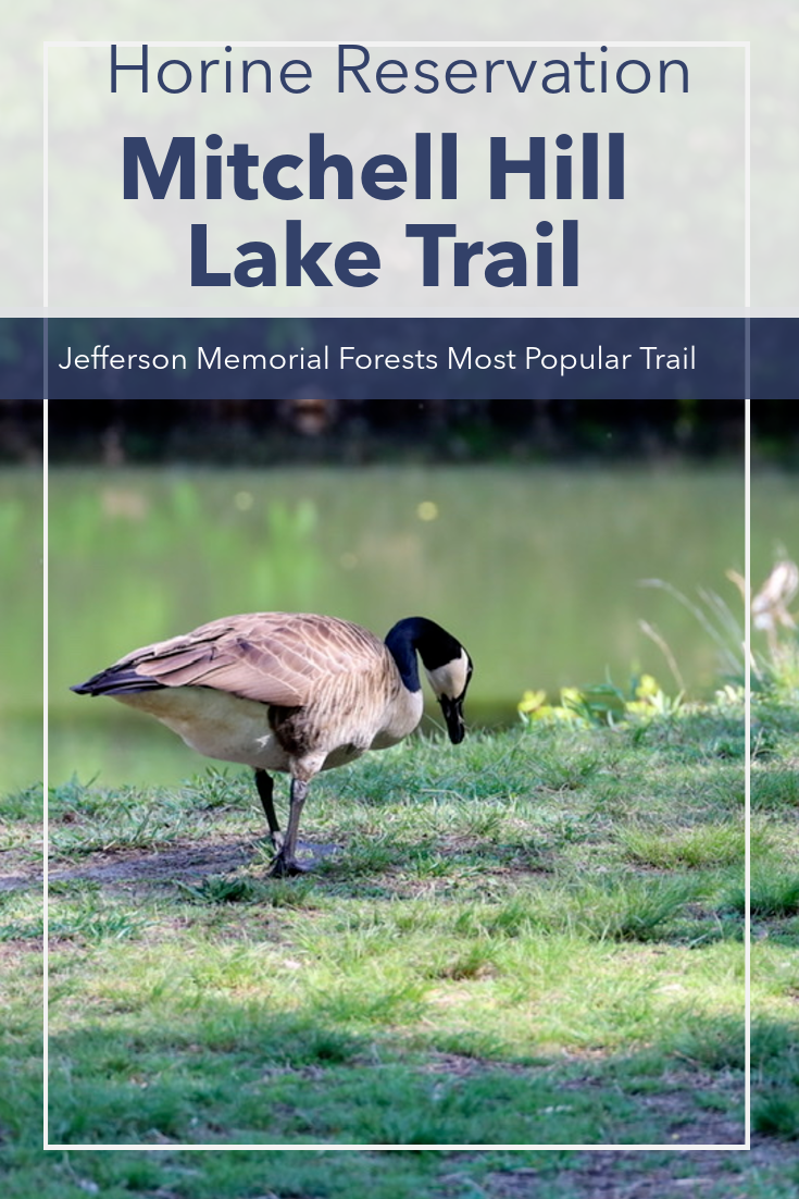 Mitchell Hill Lake Trail, The Most Popular Trail In Jefferson Memorial Forest