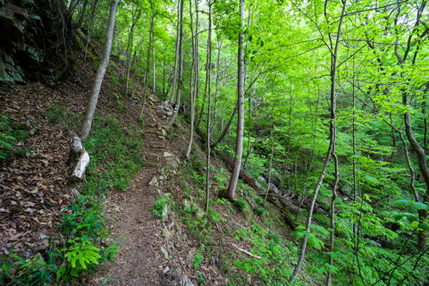 Stair climb along waterfall trail in Denny cove within south Cumberland State Park in Tennessee