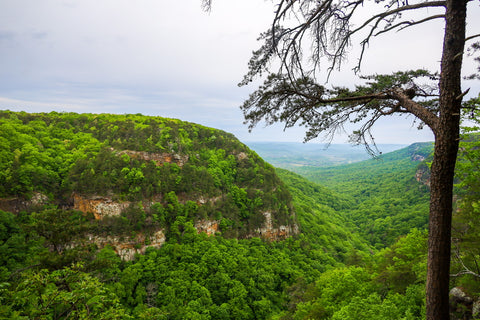 Panoramic views of cloudland canyon from the overlook trail in cloudland canyon state park Georgia