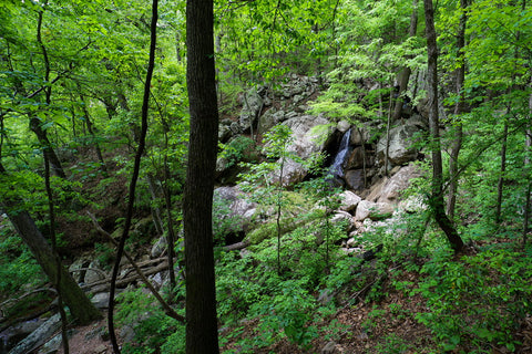 Viewing Glen falls through the trees in Lookout Mountain Tennessee