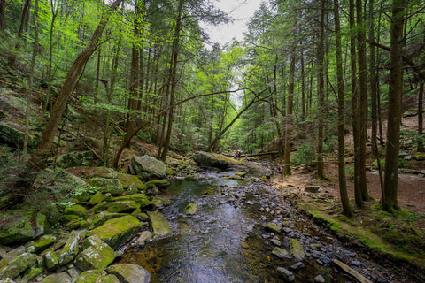 Little gizzard creek cascading through hemlock cove near foster falls in south Cumberland State Park in Tennessee