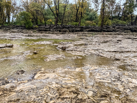 prehistoric fossil beds in falls of the ohio state park