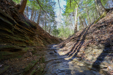 Dry creek bed along trail 3 in Turkey run state park indiana