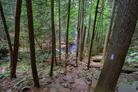 Foster falls trail along dry creek bed in South Cumberland State Park Tennessee