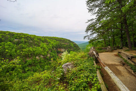 View of cloudland canyon along the overlook trail in cloudland canyon state park georgia