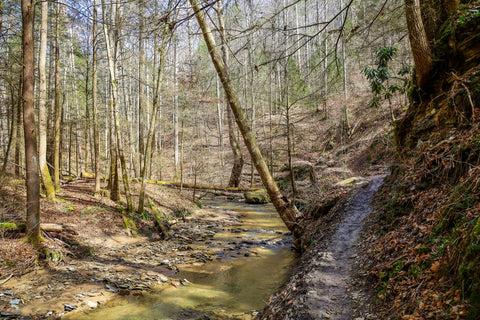 muddy trail along whittleton branch to whittleton arch in red river gorge kentucky