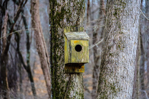 birdhouse along tulip valley trail in o'bannon woods state park