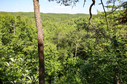 overlook point along silvermine arch trail in red river gorge