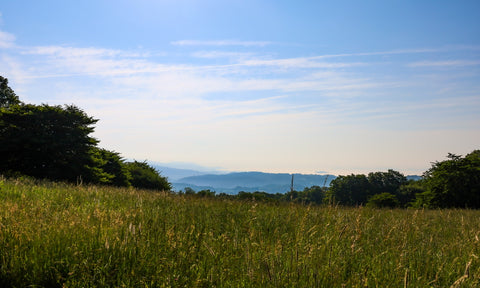 overlook of the blue ridge mountains from haw flats trail in grayson highlands state park, virginia