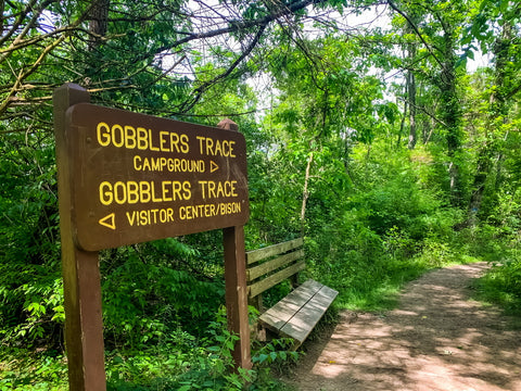 gobblers trace trail in big bone lick state park