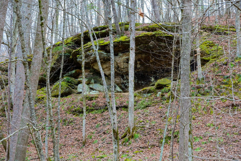 Entrance to large rockshelter in yellow birch ravine nature preserve Indiana