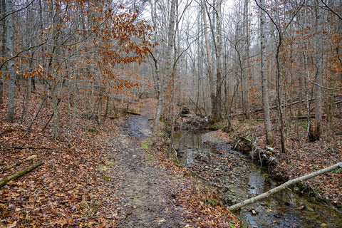 anglin falls trail through state nature preserve in kentucky