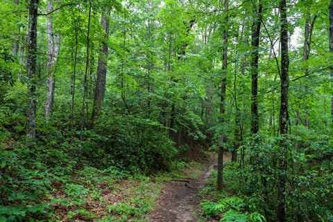 hiking along Indian Rockhouse trail in Pickett CCC State Park