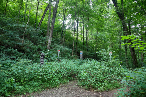 woodland hiking trail leading to tioga falls waterfall in fort knox kentucky