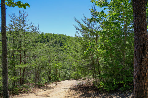 d boon hut trail red river gorge