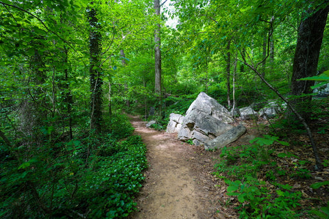 Rock formations along the Glen falls trail in Lookout Mountain Tennessee