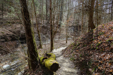 hiking along whittleton branch to whittleton arch in red river gorge kentucky